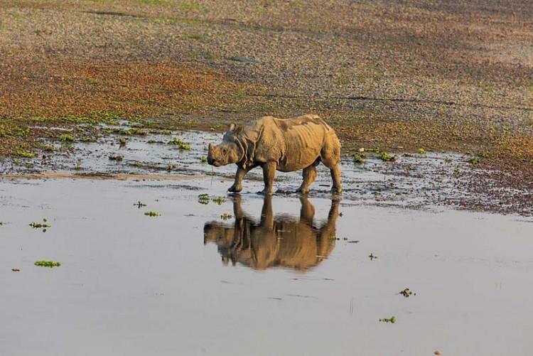 sm.rhino .750 1